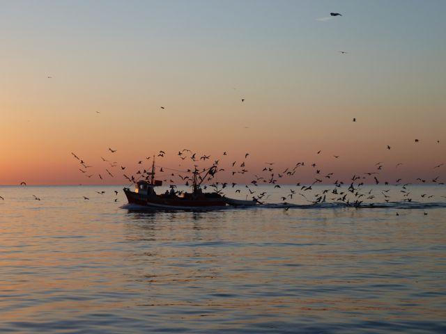 En dan is het zover, de visdag breekt aan, wij varen uit als de vissers binnenkomen.