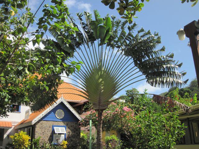 Tropische begroeiing