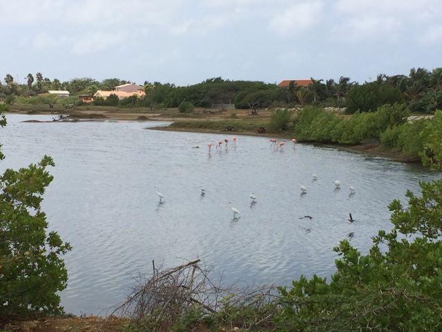 En weer een meertje vol flamingo's en ibissen