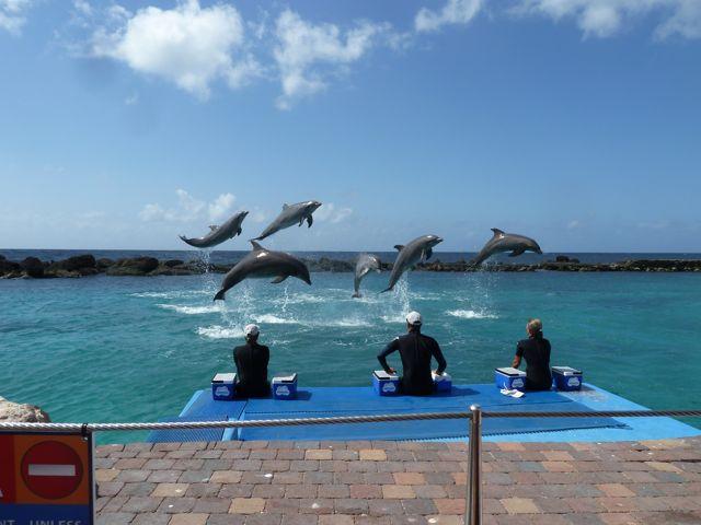 natuurlijk ook even naar de dolfijnenshow