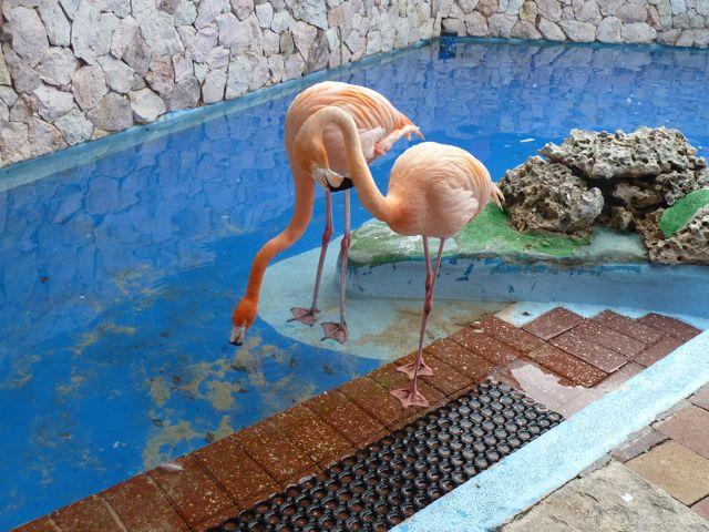 En flamingo's van heel dichtbij