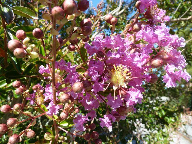 alles volop in bloei, ik vond deze crepepapierachtige bloemetjes zo mooi