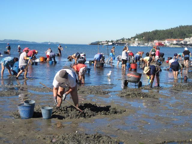 honderden mensen staan elke werkdag te graven naar schaaldieren