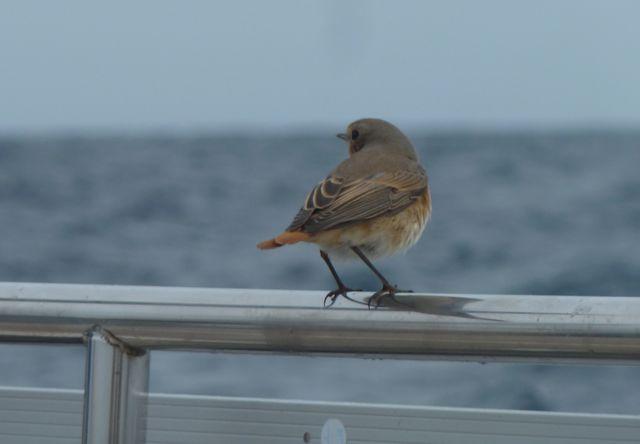 En ook deze reiziger zocht even een rustplekje bij ons aan boord
