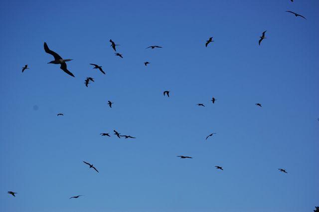 En de andere vogels hangen in de lucht
