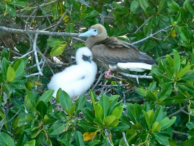 Met jong op het nest