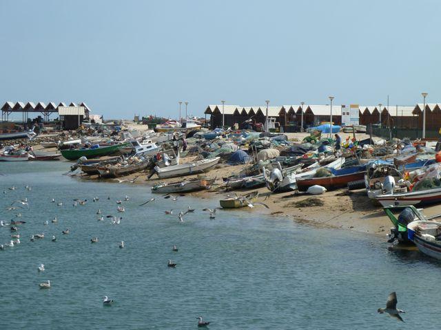 Enorme bedrijvigheid van de vissers wat wordt gewaardeerd door de meeuwen