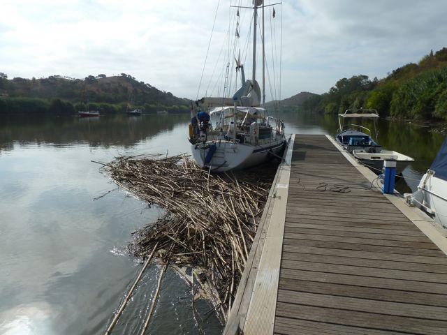 Nadeel van de steiger is het verzamelen van de rotzooi van de rivier op onze kont. Als het tij kentert, drijft dit eiland vanzelf weer weg.