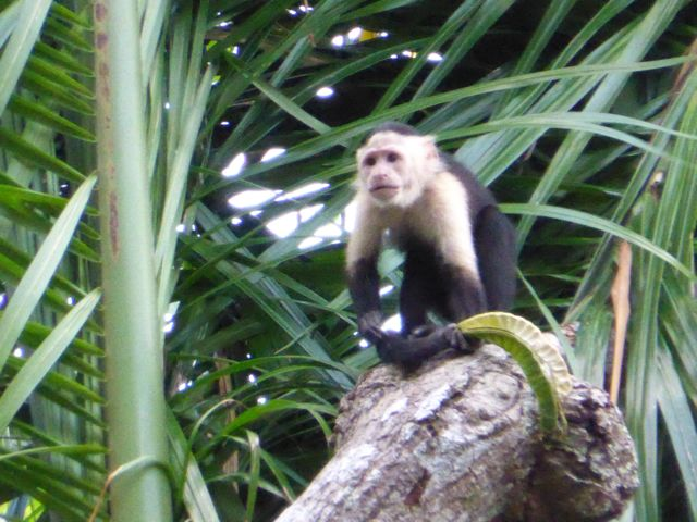 evenals apen