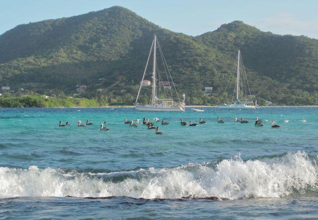 Bij Sandy Island, veel pelikanen voor de Déesse en de Yana