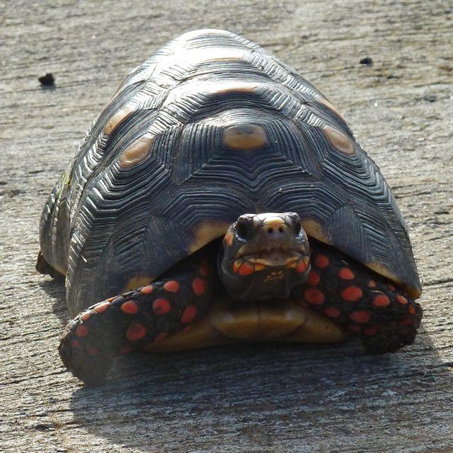 Prachtige tekening op zo'n landschildpad