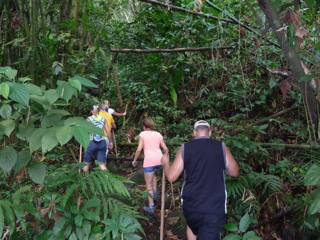 We dringen steeds dieper door in het regenwoud, we zien een totaal nieuwe vegetatie